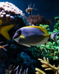 fish-in-the-coral-reef
